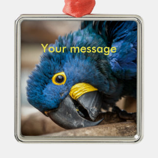 Square Ornament cute Hyacinth Macaw parrot