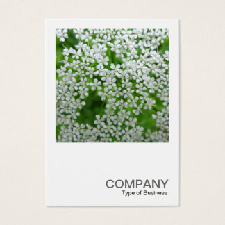 Square Photo 0232 - Cow Parsley Business Card