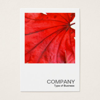 Square Photo 0352 - Japanese Maple Leaf Business Card