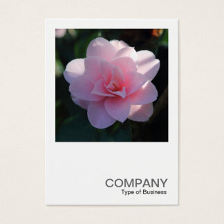 Square Photo 0394 - Pink Camellia Business Card