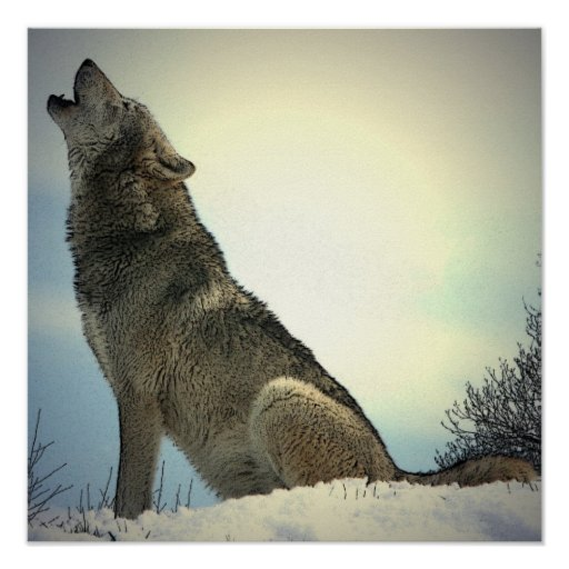 Square Posters - Howling Wolf Poster Print
