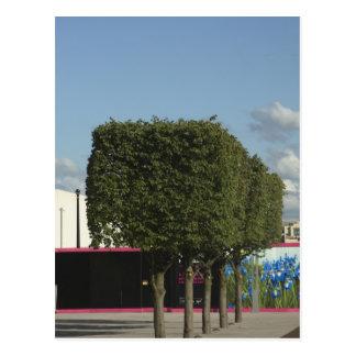 Square Trees Postcard