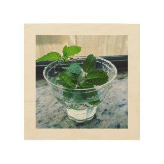 Square Wood Art - Herbs