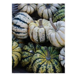 Squash Fall Harvest Postcard