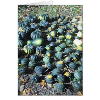 Squash Harvest Cards