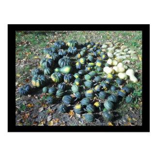Squash Harvest Postcard