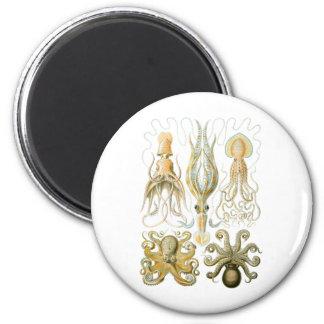 Squid & Octopus Magnet