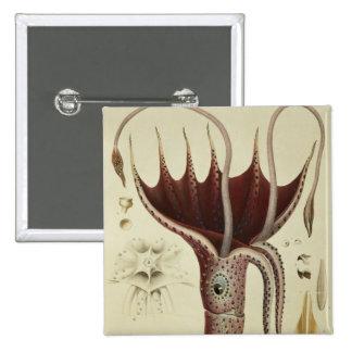 Squid, Pl.2 from 'Histoire Naturelle 15 Cm Square Badge