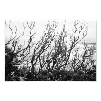 Squiggly Trees Art Photo