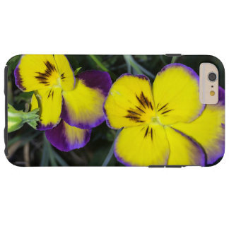 Squinting Pansy Tough iPhone 6 Plus Case