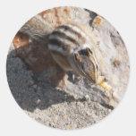 squirel eating sticker