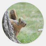 squirel in hole sticker