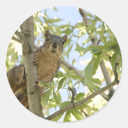 squirel in tree sticker