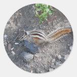 squirel on rock sticker