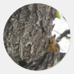 squirel on tree sticker