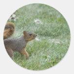 squirel walking sticker
