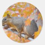 squirel with nut sticker