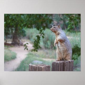 "Squirrel - 19"" x 13"", Value Poster Paper (Matte)"