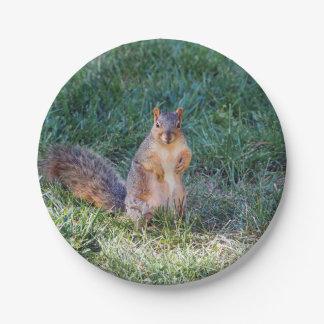 Squirrel 95 paper plate