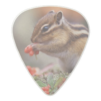Squirrel Acetal Guitar Pick