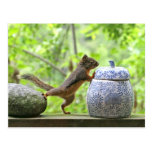 Squirrel and Cookie Jar