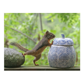 Squirrel and Cookie Jar Postcard