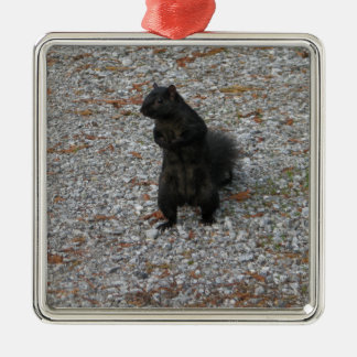 Squirrel Attitude Christmas Ornament