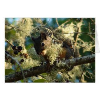 Squirrel Baby 2009 Card