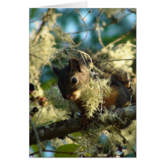 Squirrel Baby 2009 Note Card