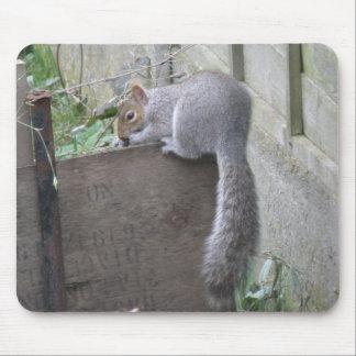 Squirrel Balancing Act Mousepad