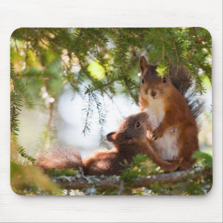 Squirrel Breastfeeding Mouse Mat