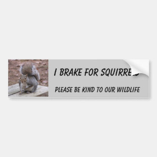 "squirrel bumper sticker featuring ""Summer"""