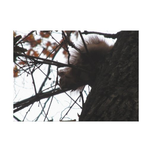 squirrel stretched canvas prints