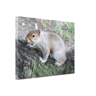 Squirrel Stretched Canvas Print