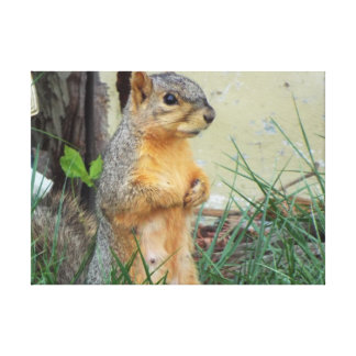 squirrel canvas stretched canvas print