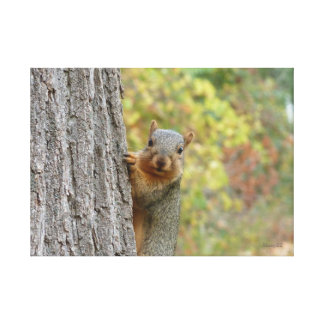 Squirrel canvas gallery wrapped canvas
