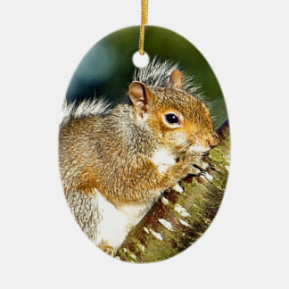 Squirrel Ceramic Oval Decoration