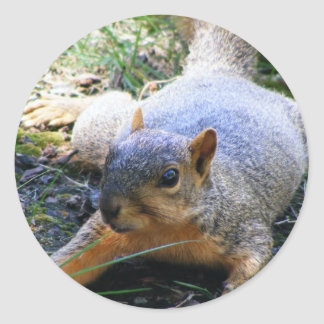 squirrel classic round sticker