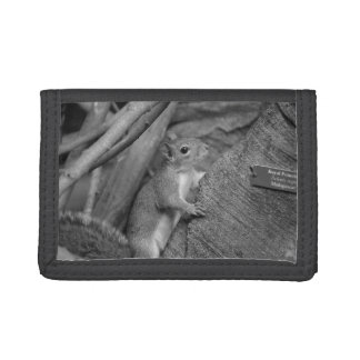 squirrel climbing ficus tree bw tri-fold wallet