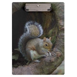 Squirrel Clipboard