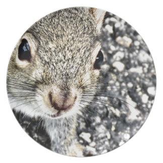 Squirrel Close Up! Plate