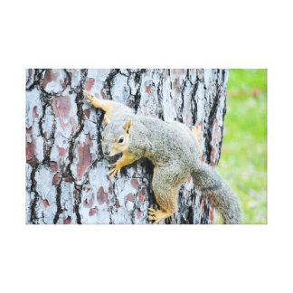 Squirrel crawling a tree gallery wrapped canvas