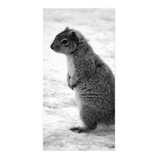 Squirrel Customised Photo Card