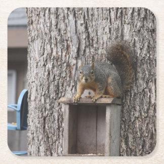 Squirrel Drink Coaster