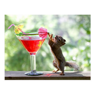 Squirrel Drinking Cocktail Post Cards