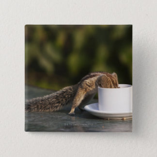 Squirrel drinking from coffee cup at Indian 15 Cm Square Badge