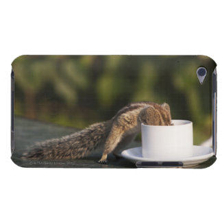 Squirrel drinking from coffee cup at Indian Barely There iPod Cover