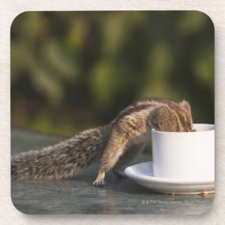 Squirrel drinking from coffee cup at Indian Beverage Coasters