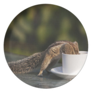 Squirrel drinking from coffee cup at Indian Dinner Plates