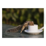 Squirrel drinking from coffee cup at Indian Greeting Card